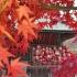 紅葉🍁を楽しむコーディネート